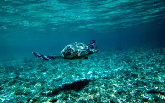 water, animal, underwater, под, черепаха, id, world, drawing
