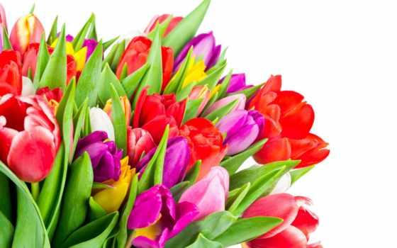 много, цветы, desktop