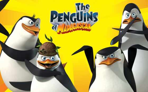 пингвины, мадагаскара, penguins