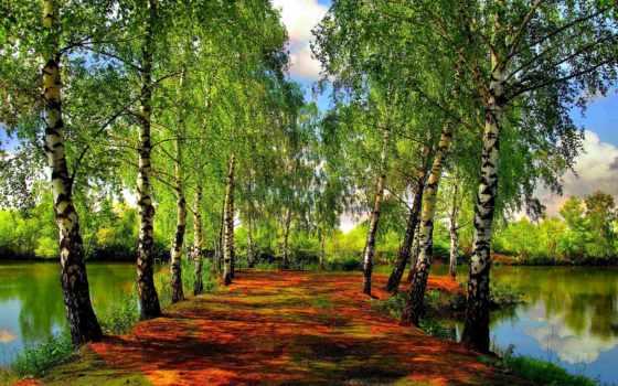 весна, деревья, река