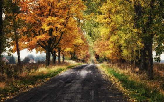 amazing, осень, природа