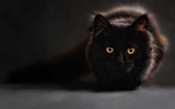 кот, black, zhivotnye, глазами, котенок, жёлтыми, eyes,