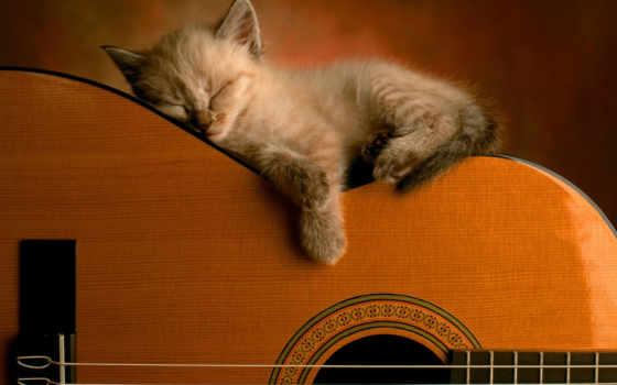 котенок, фон, металл, музыка, desktop, browse, гитара, guitars, bwalles,