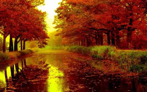 осень, what, осени, дождливая, красавице, яркой, редко, liveinternet,