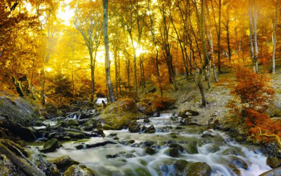 осень, пейзажи -, landscape, осінь, струмок, фотообои, лес, заказать, природа, наборы, водопады,