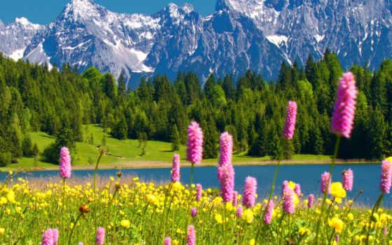 весна, cvety, природа, горы, река, лес, тематика, красиво, макро, trees, landscape,