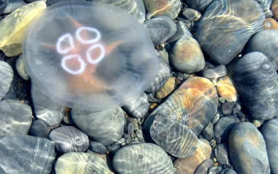 черном, чёрное, море, моря, медузы, jellyfish, strong, burn, чёрного,