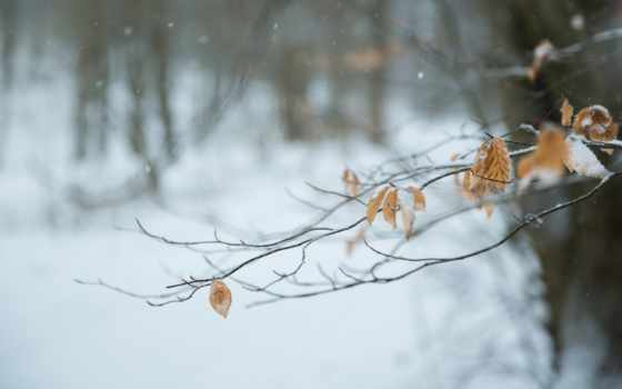 winter, природа, views, branch, berries, снег, desktop, макро,