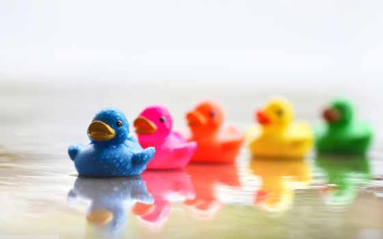 настроения, утка, ducks, best, настроение, хорошего, desktop,