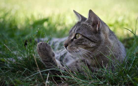 кот, серый, трава, ложь, striped, котенок, зелёный