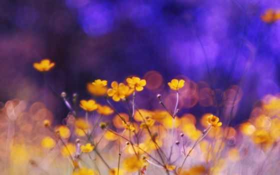 растительность, яркие, природа