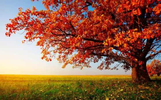 осень, золотая, природа, страница, листва,