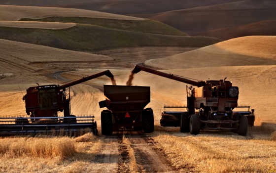palouse, комбайны, комбайн, поле, техника, гряда, пшеница, урожай,
