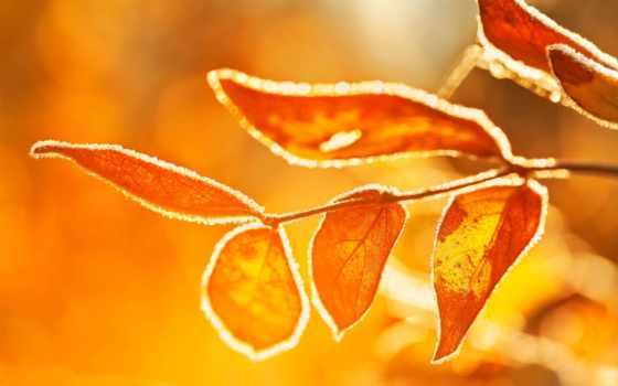 утро, sun, иней, ubuntu, covered, листья, gary, desire, стаффорд, raring, ringtail,