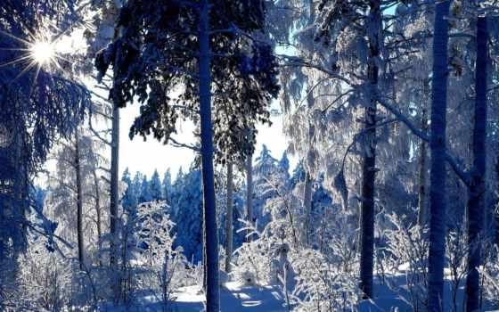 снег, природа, winter, seasons, trees, изображение, tapety,