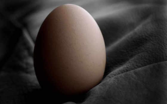 яйцо, ткань, черная, череп, плесень, красивое,