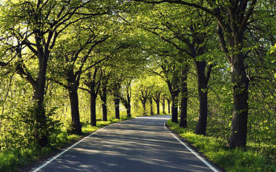 дорога, асфальт, лес