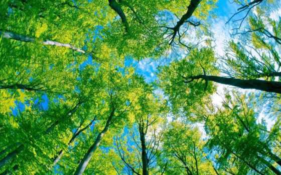 деревя, деревьями, под, лес,