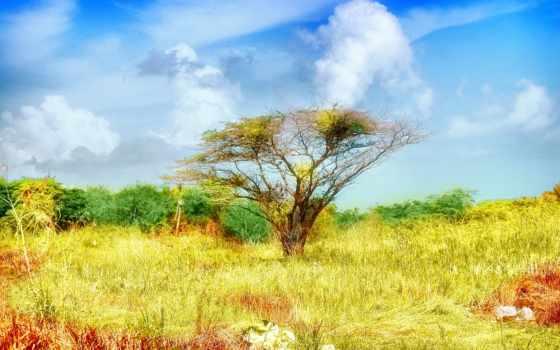 степь, desktop, осень, дерево, herbst, природа, одинокий,