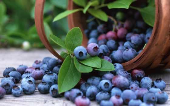 брусника, ягода, рассыпанный, ковш,