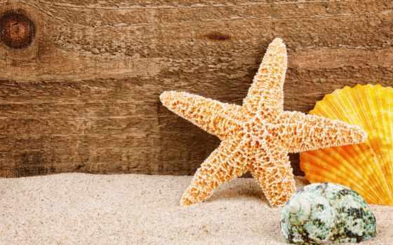 песок, stock, star, ракушки, морская, клипарт, море, морские, фото,