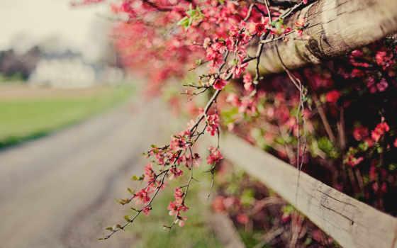 весна, full, фон, природа, cvety, разрешения, высокого, hdtv, bokeh,