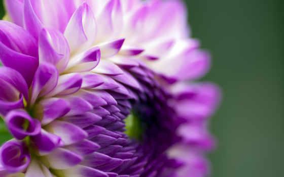 лепестки, цветок Фон № 23920 разрешение 2560x1600
