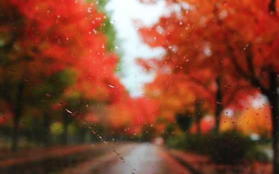 осень, стекло
