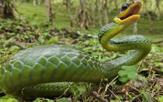 змея, змеи, зелёная
