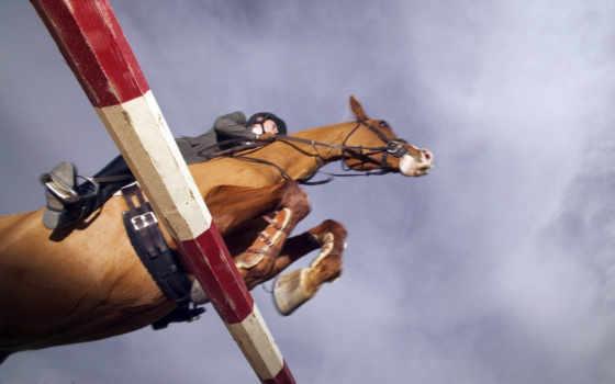 спорт, лошадь, спорту