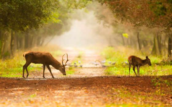 олени, лес, лань, природа, trees, снег, zhivotnye, ручей, дорога,