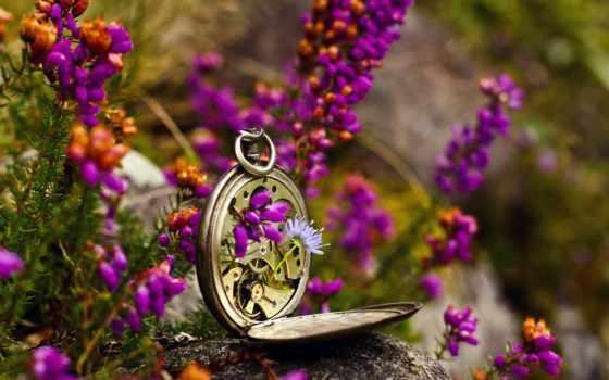 watch, pocket, том, уже, когда, flowers, произошло, перестанете, копаться,