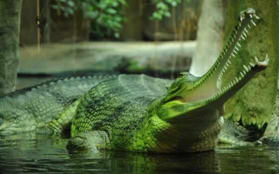 animal, gharial, doo, fish, крокодил, baby, funny, meme, cute, акула
