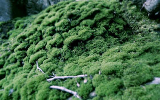 moss, природа