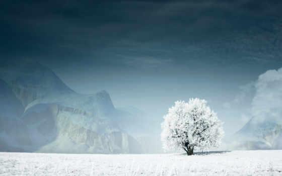 дерево, снег