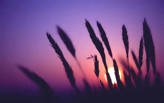 закат, телефон, красивые