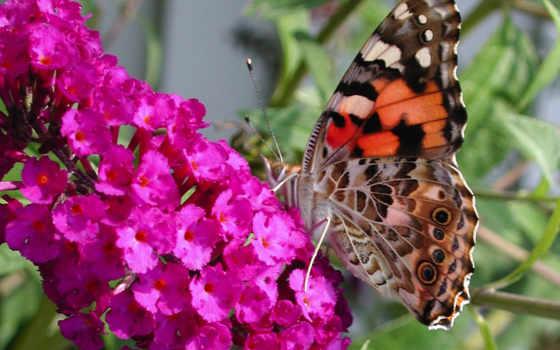 mariposa, una, flor, flores, sobre, para, twitter, posada, que,