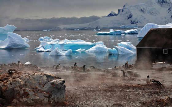 antarctic, лед, antartic, антарктида, penguins, iceberg,