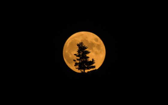 луна, спутник, силуэт, eclipse, silhouettes, изображение, trees, дерево,