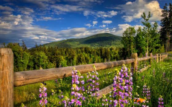 весна, горы, cvety