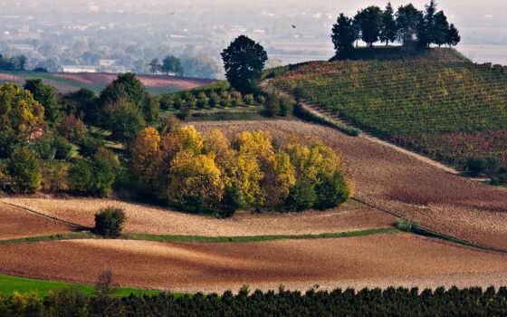поле, зелёный, hill, трава, landscape, природа, дерево, ферма, чая, agriculture
