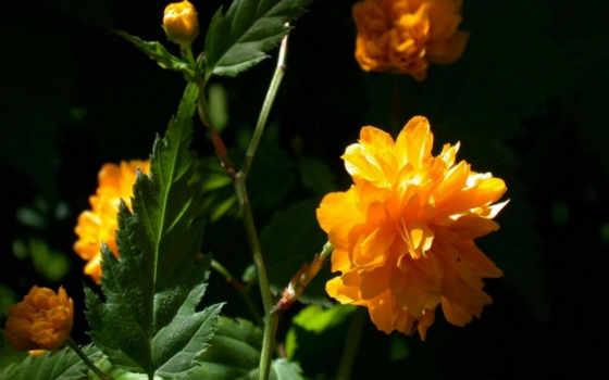 flower Фон № 16086 разрешение 1920x1200