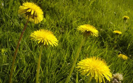 Цветы 25523