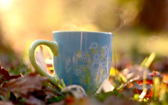 чая, cup, teas
