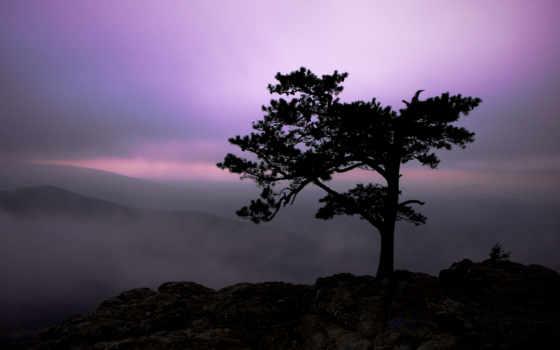 сумерки, landscape, природа, небо, дерево, горы, туман, свет, rocks,