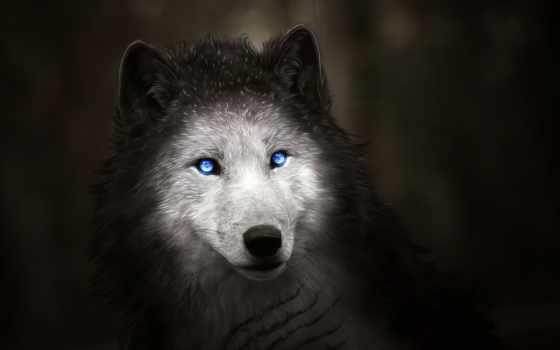 волк, free, mobile, animal, качество, хороший, телефон