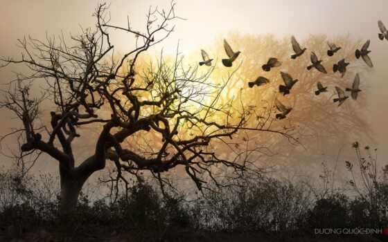 качественные, permission, библиотека, stil, другой, дерево, гора, qaim, природа