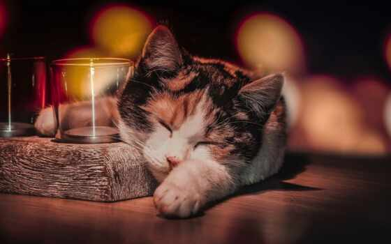 кот, calico, animal, спать, уют, балахон, ready, side, striped