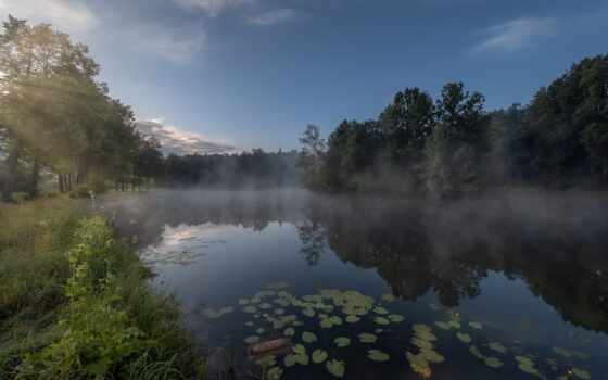 tapety, лес, утро, над, природа, день, new, screensaver, pulpit