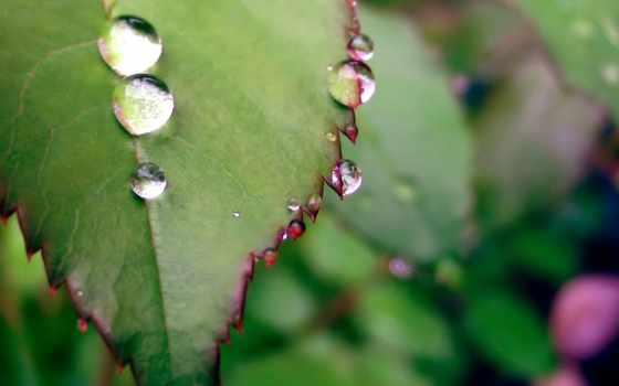 зелень,листик,капельки,роса,